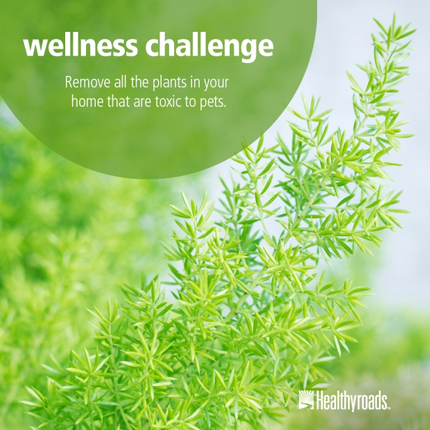 Jul_29_wellness_challenge_HYR